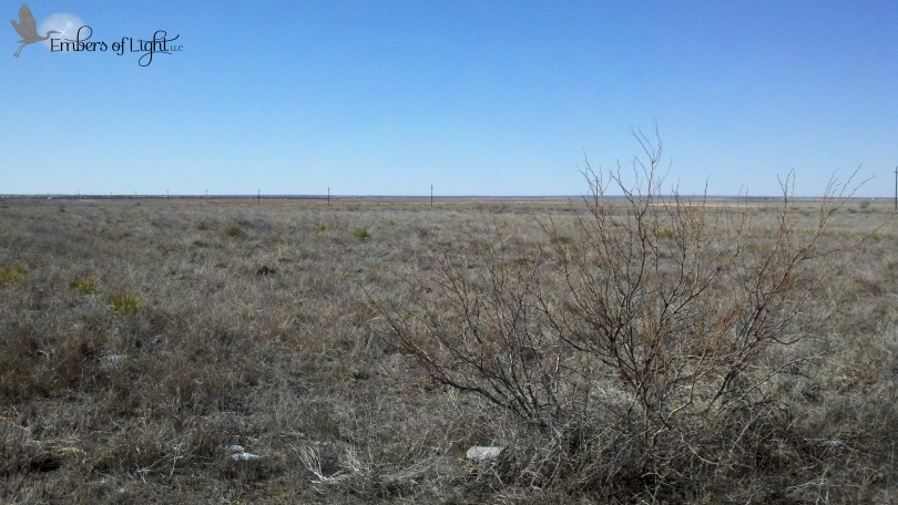 arid, mesquite bush, west Texas, plains,