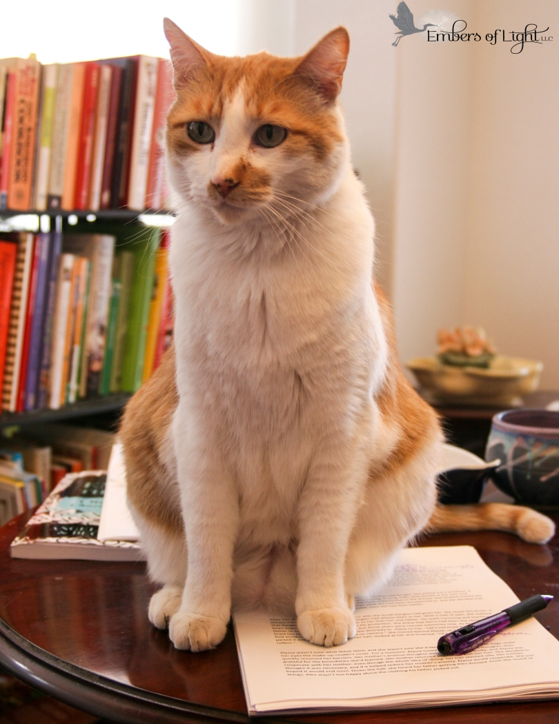 Cat on papers