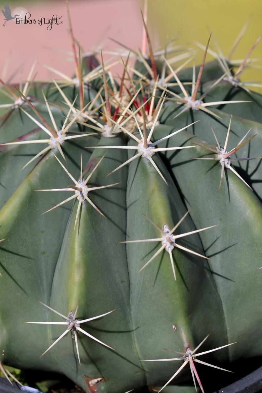 cactus, thorns