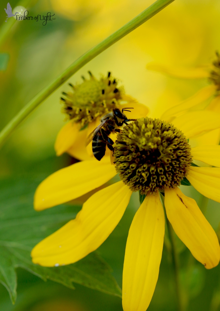 bee, pollinating, yellow flower