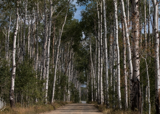 Aspen Alley, Wyoming