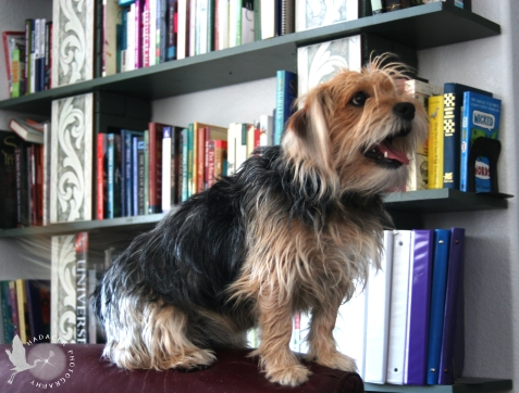 dog and books