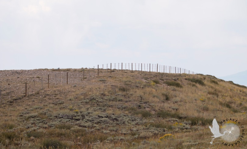 grassy plain; barbed-wire fence
