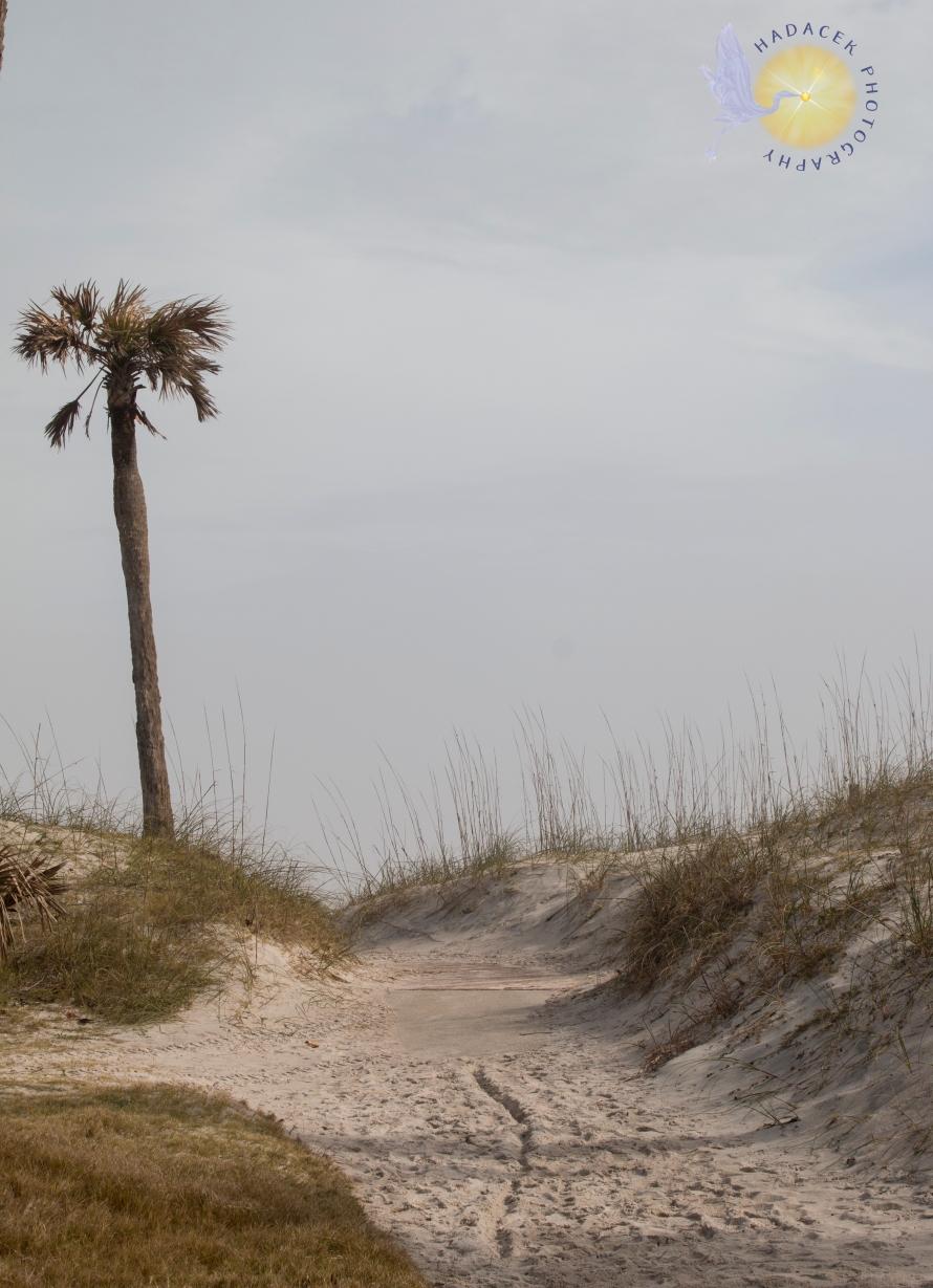 palm tree, beach