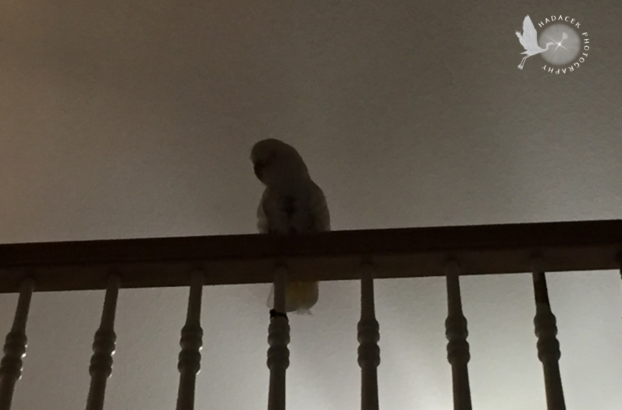 parrot silhouette