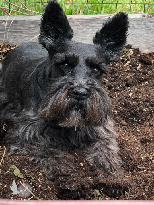 black dog in dirt
