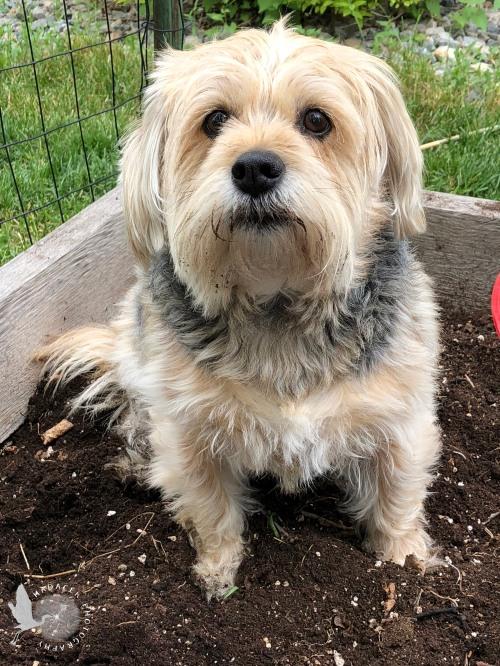 black and tan shaggy dog
