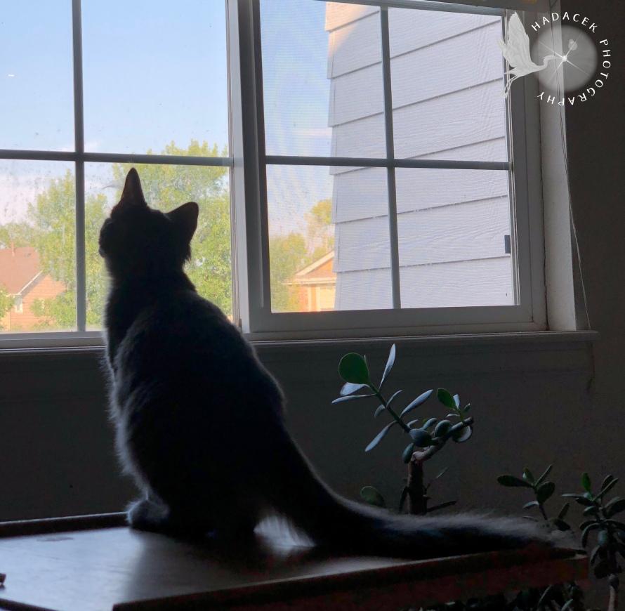 kitten at window