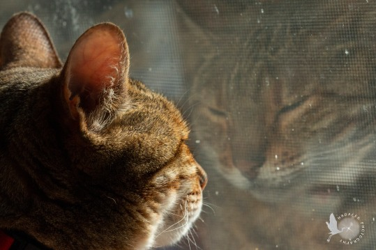 Cat and reflection
