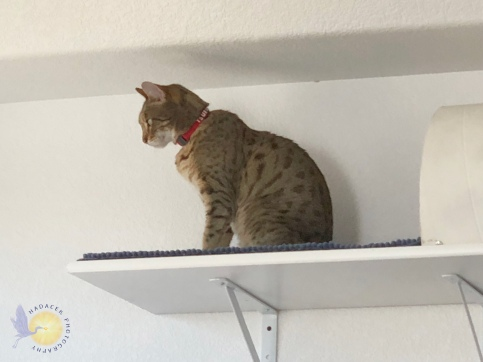 cat on shelf
