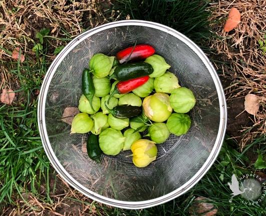 jalapenos, tomatillos