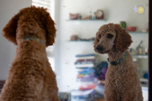 dog looking in mirror