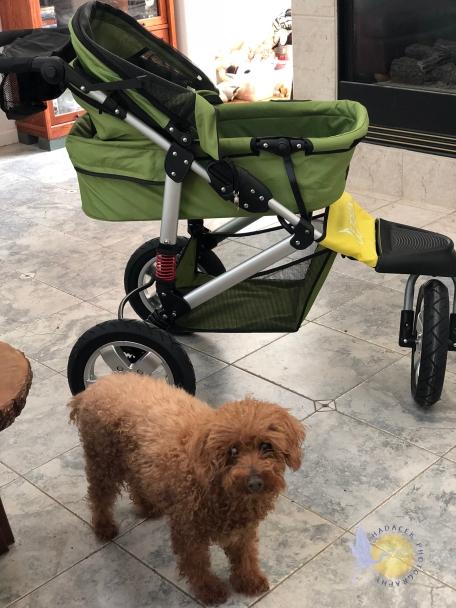 dog stroller and dog