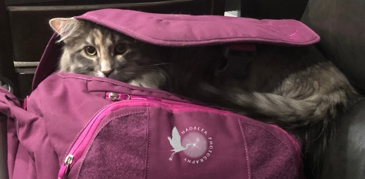 gray cat in fuchsia bag
