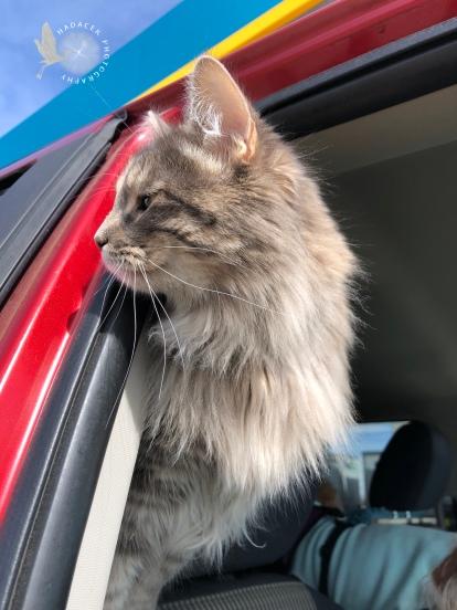 Cat in truck doorway