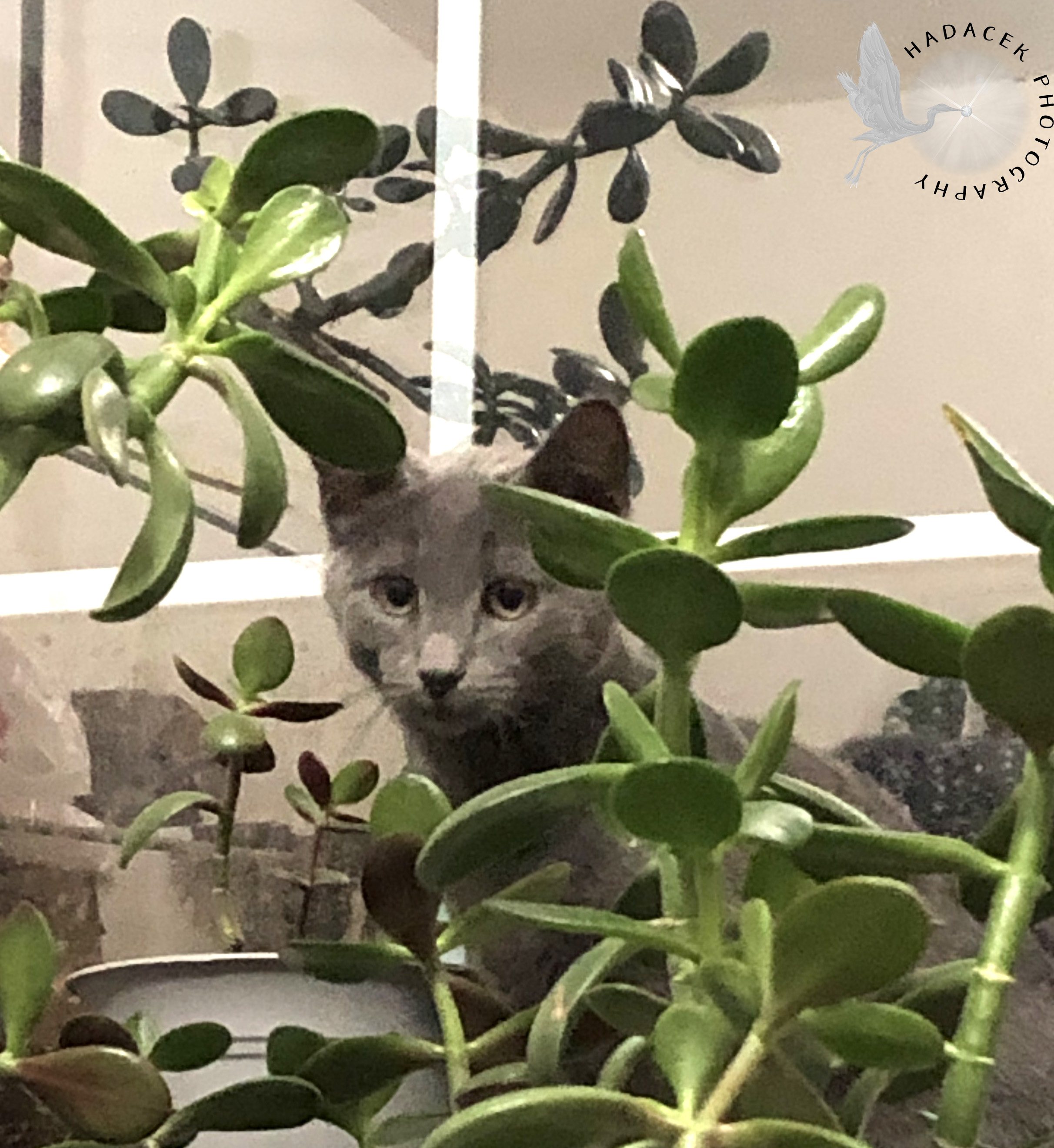 Cat and jade plants