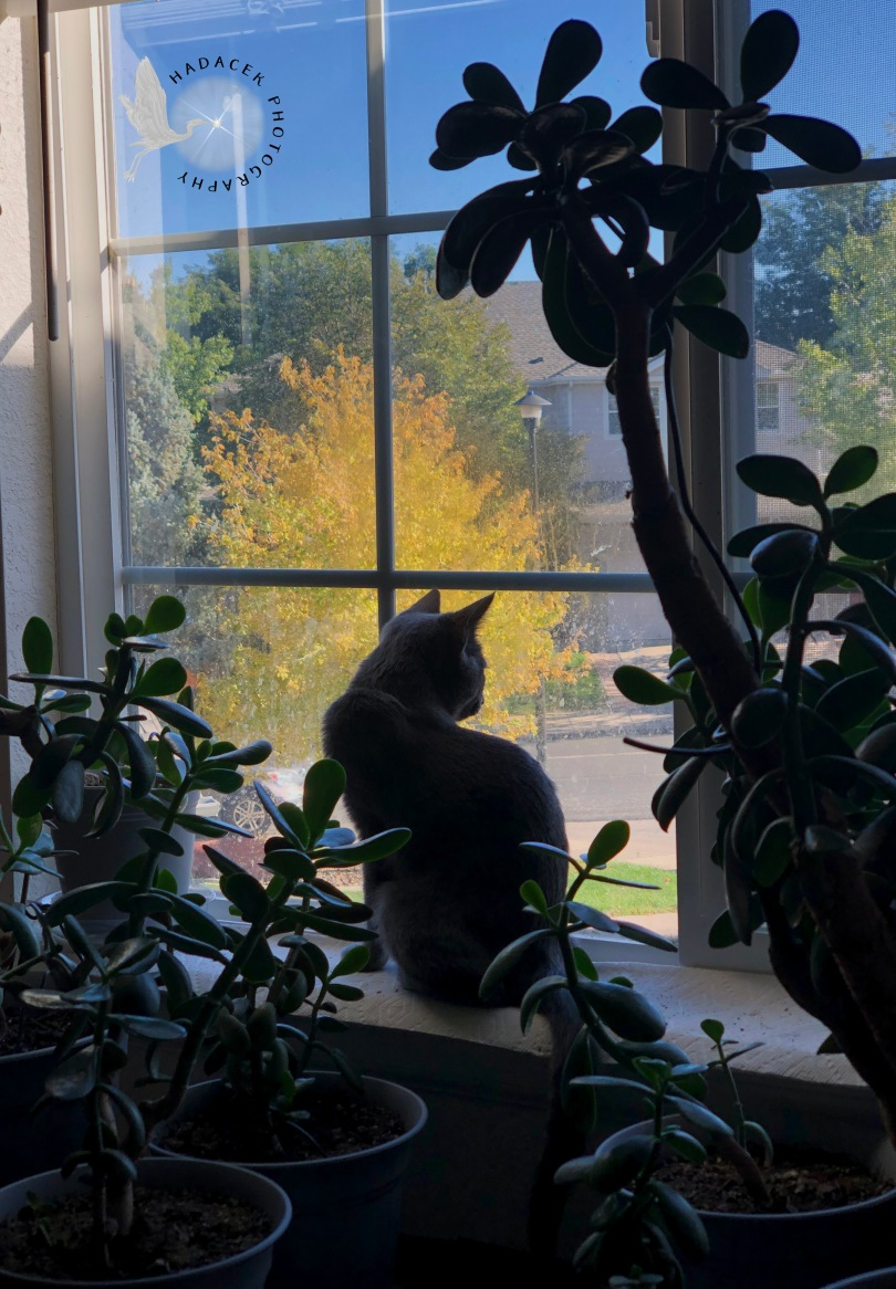 cat, jade plants
