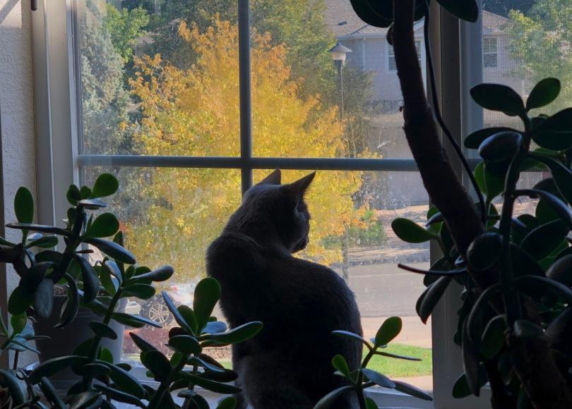 cat, jade plants