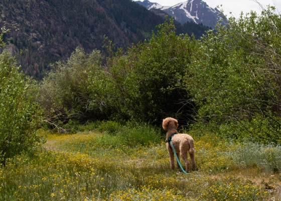 dog; wildflowers