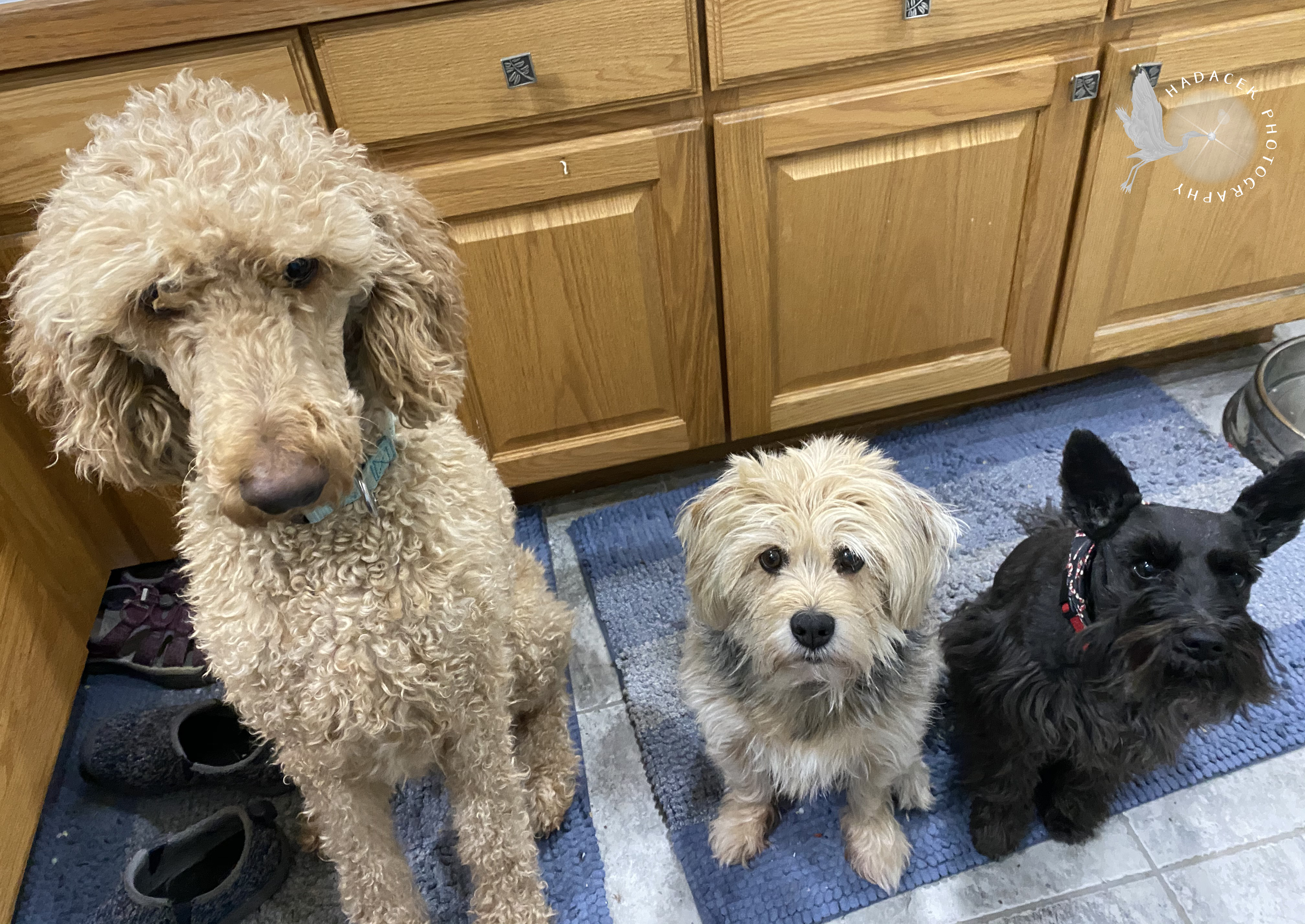 sitting dogs