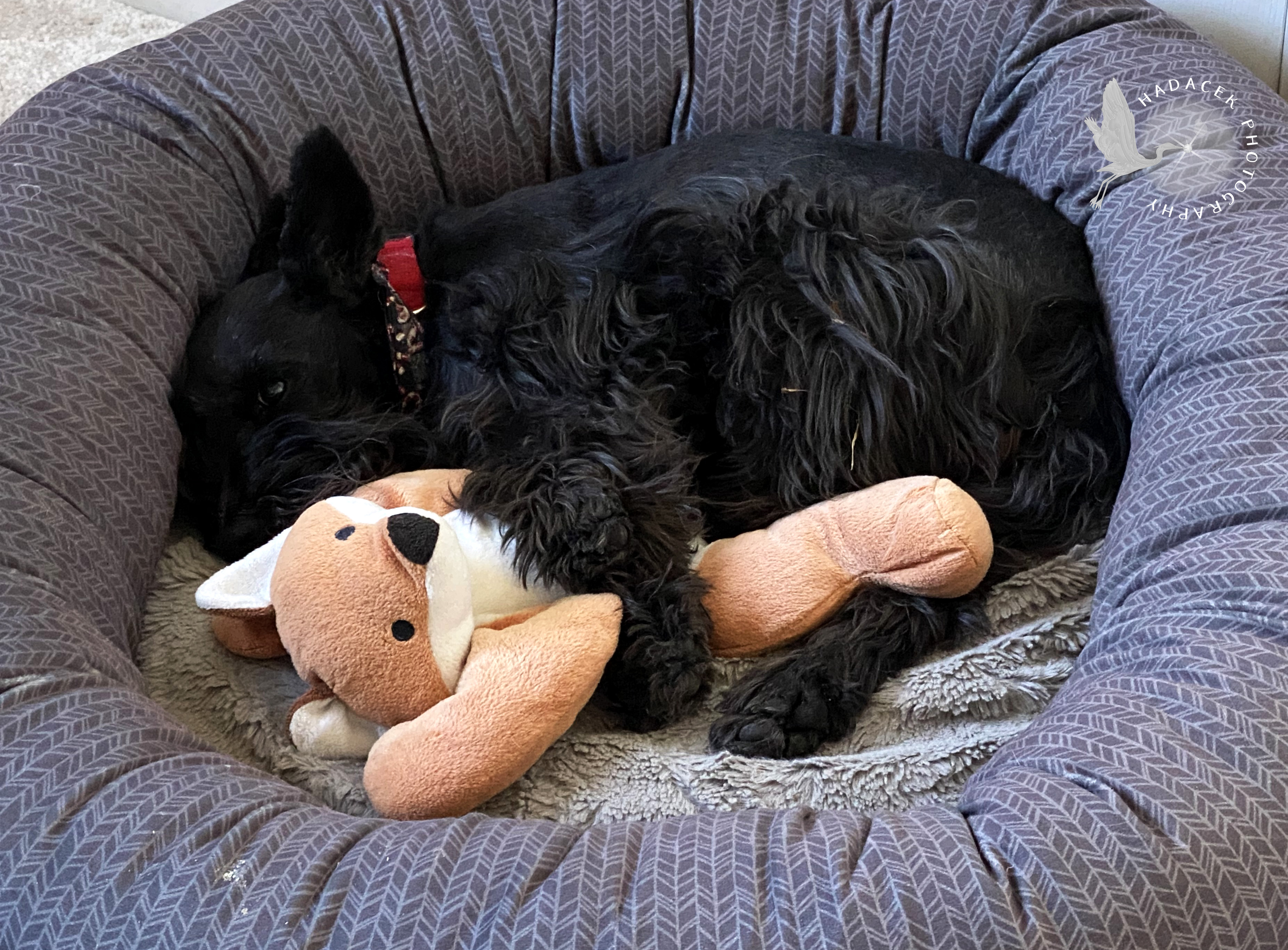 black dog snuggling toy
