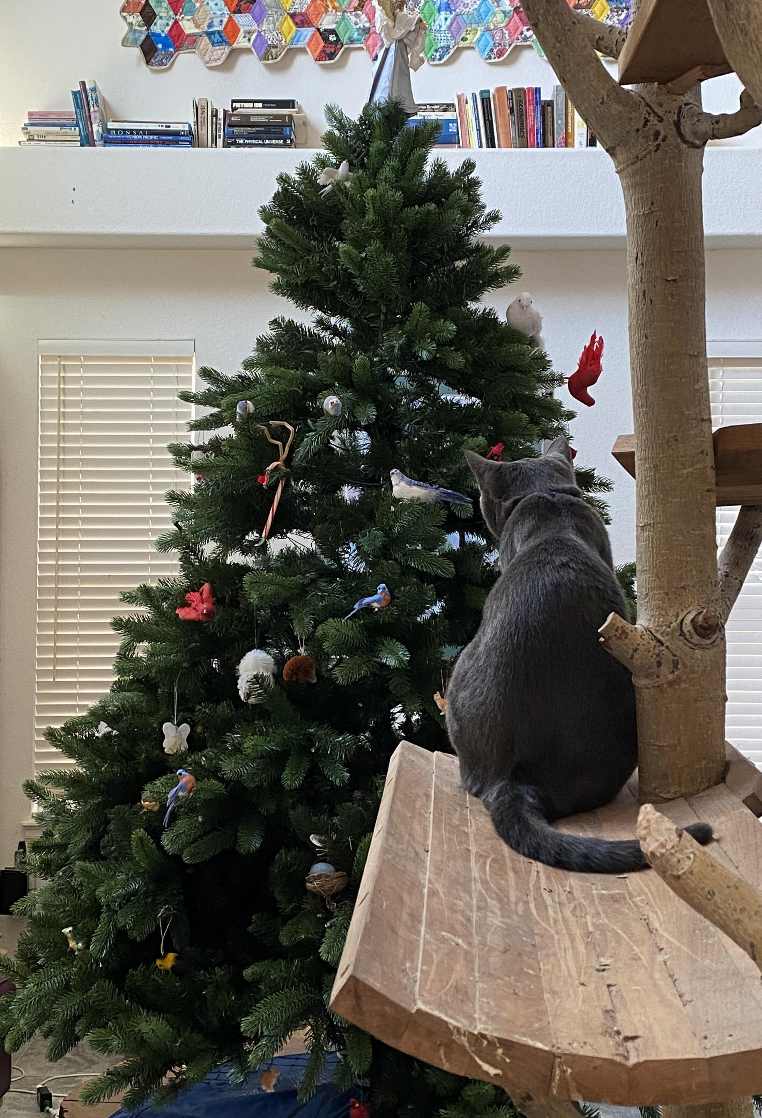 cat, christmas tree