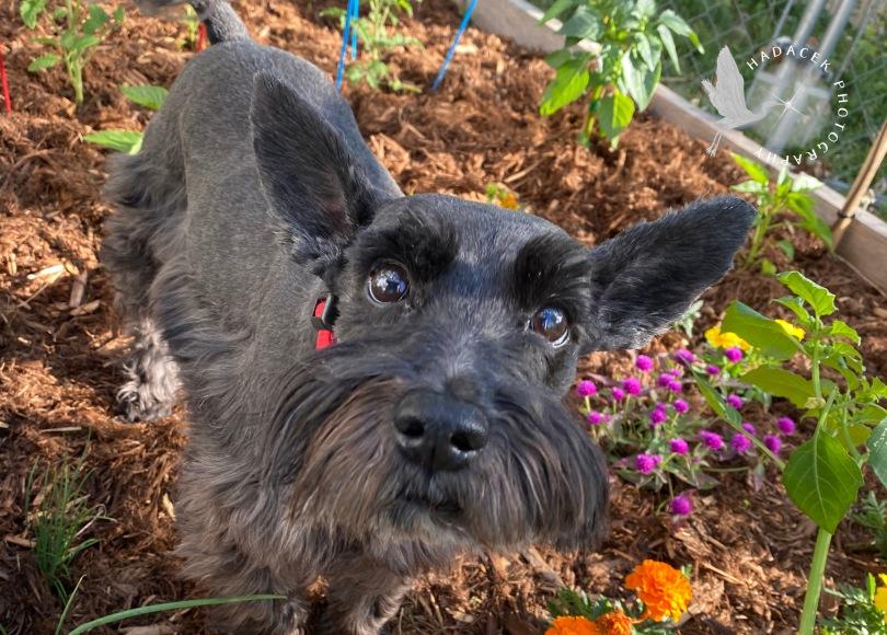 Black dog in garden