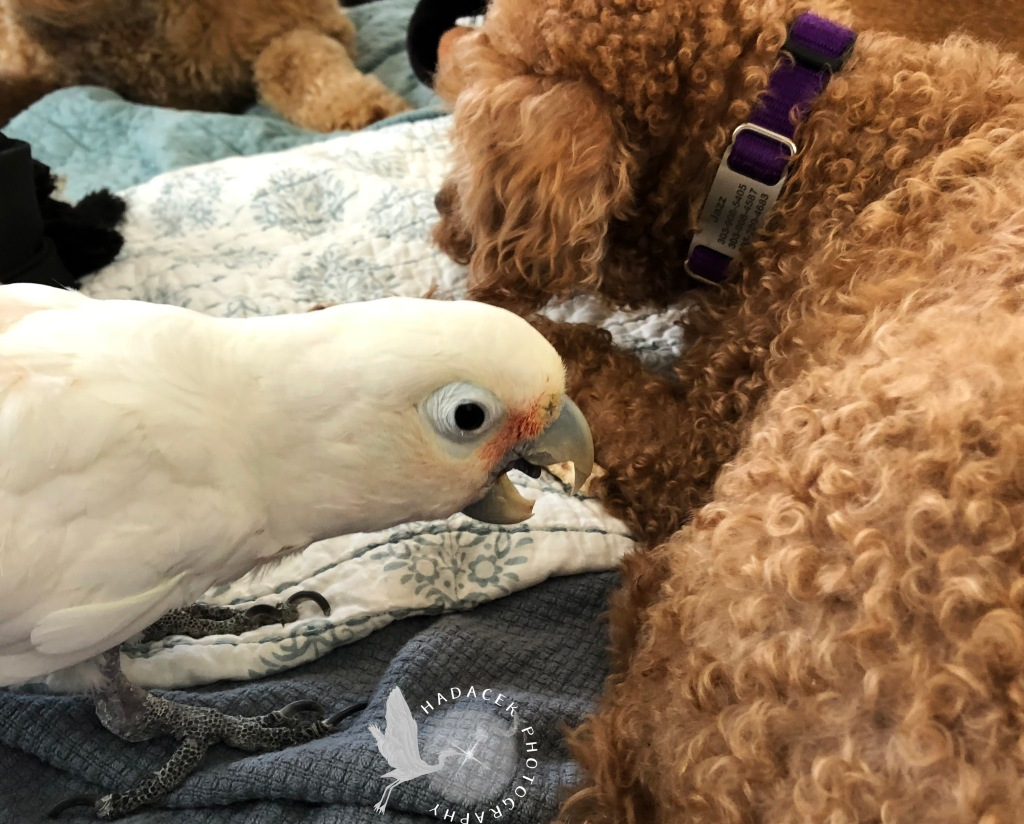 bird and dog