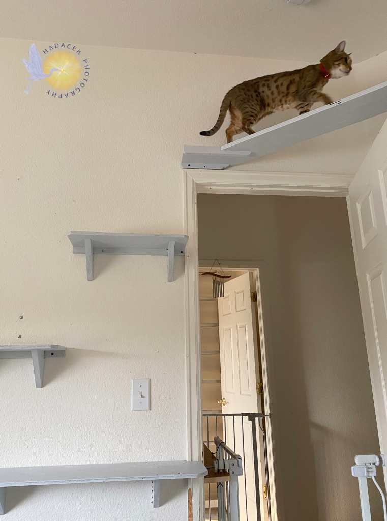 Cat on catwalk