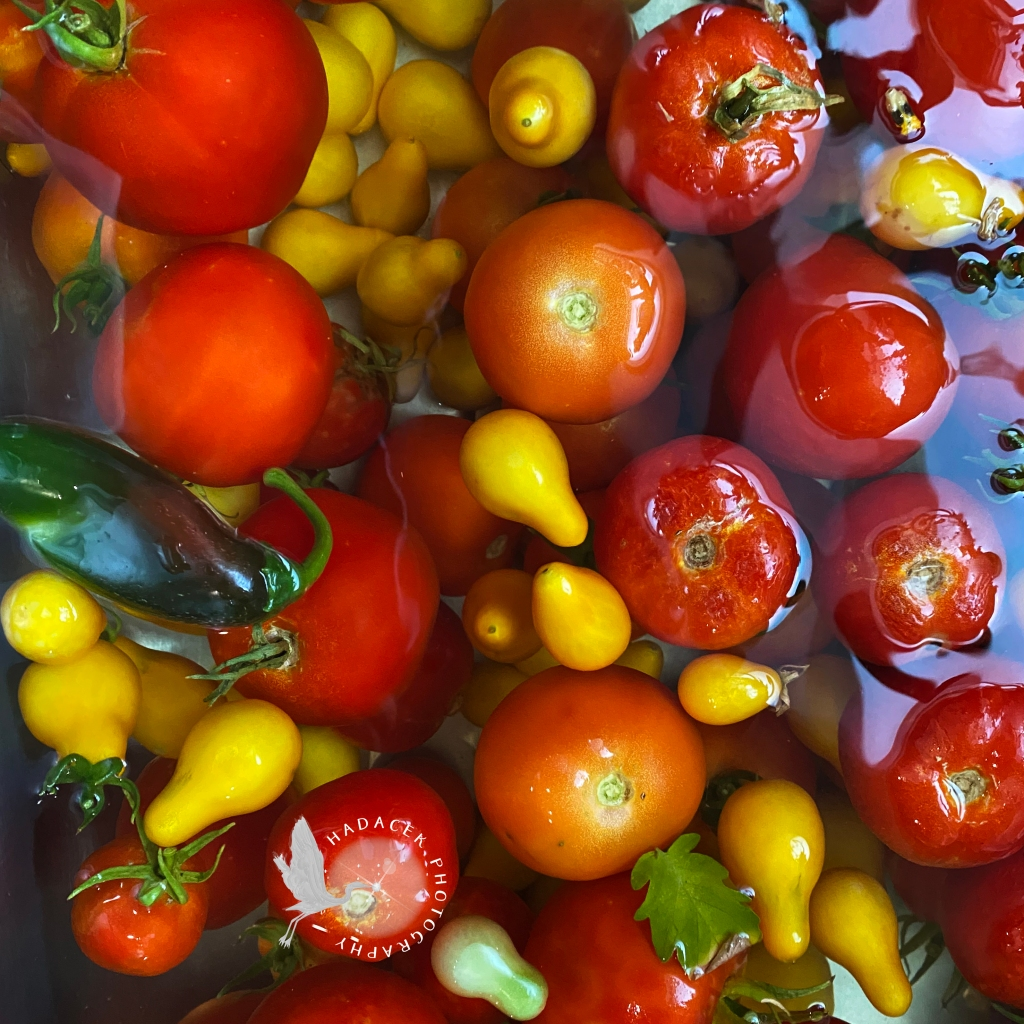 Ripe tomatoes, yellow pear tomatoes