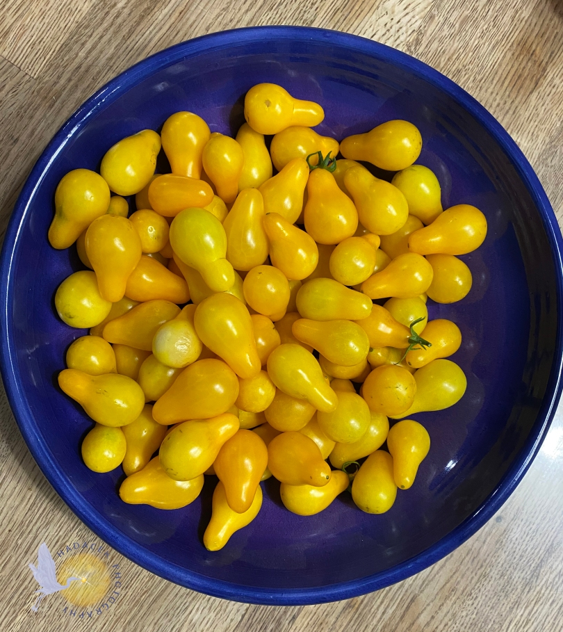small, pear-shaped, yellow tomatoes in a purple dish