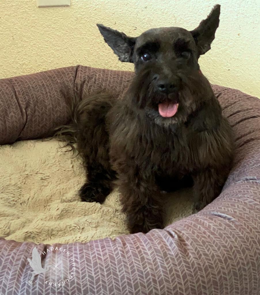black dog in her bed