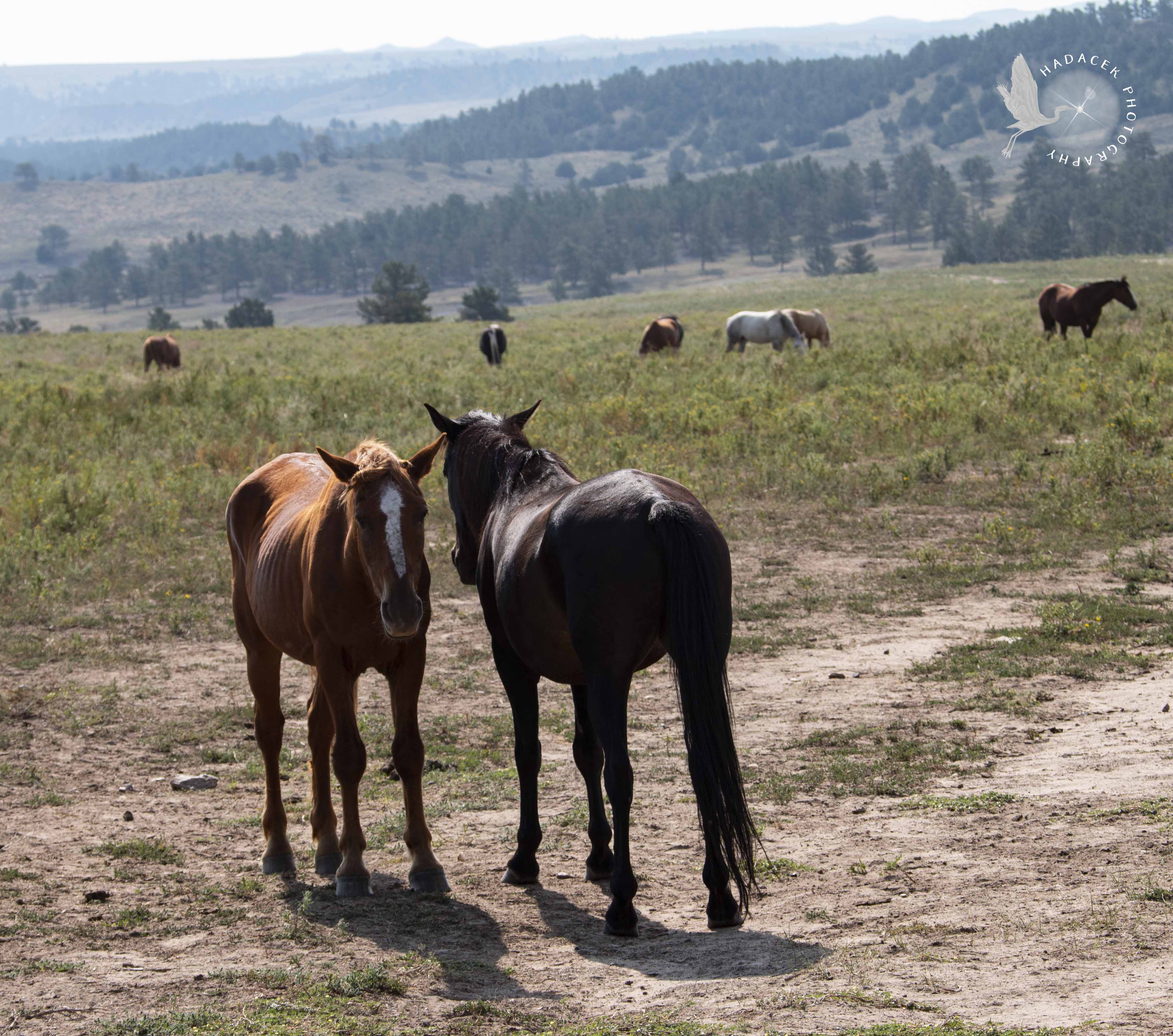 Black Hills Wild Horse Sanctuary Peace With My Life