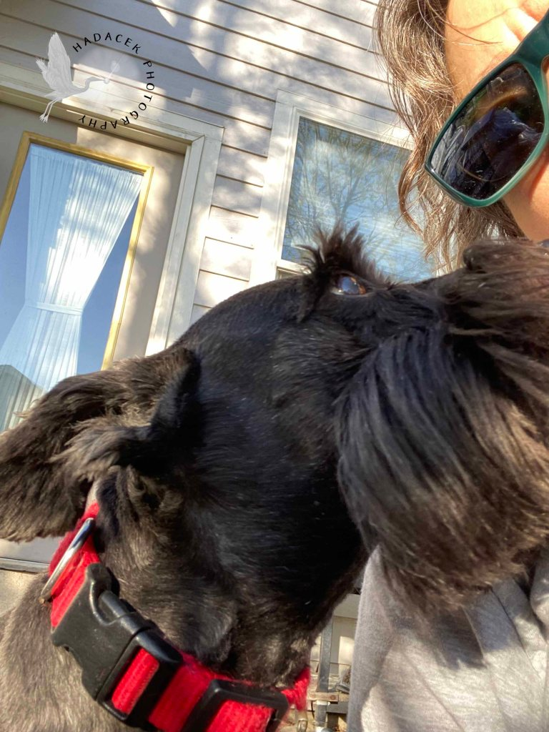 Small black dog kisses the cheek of her human mom.