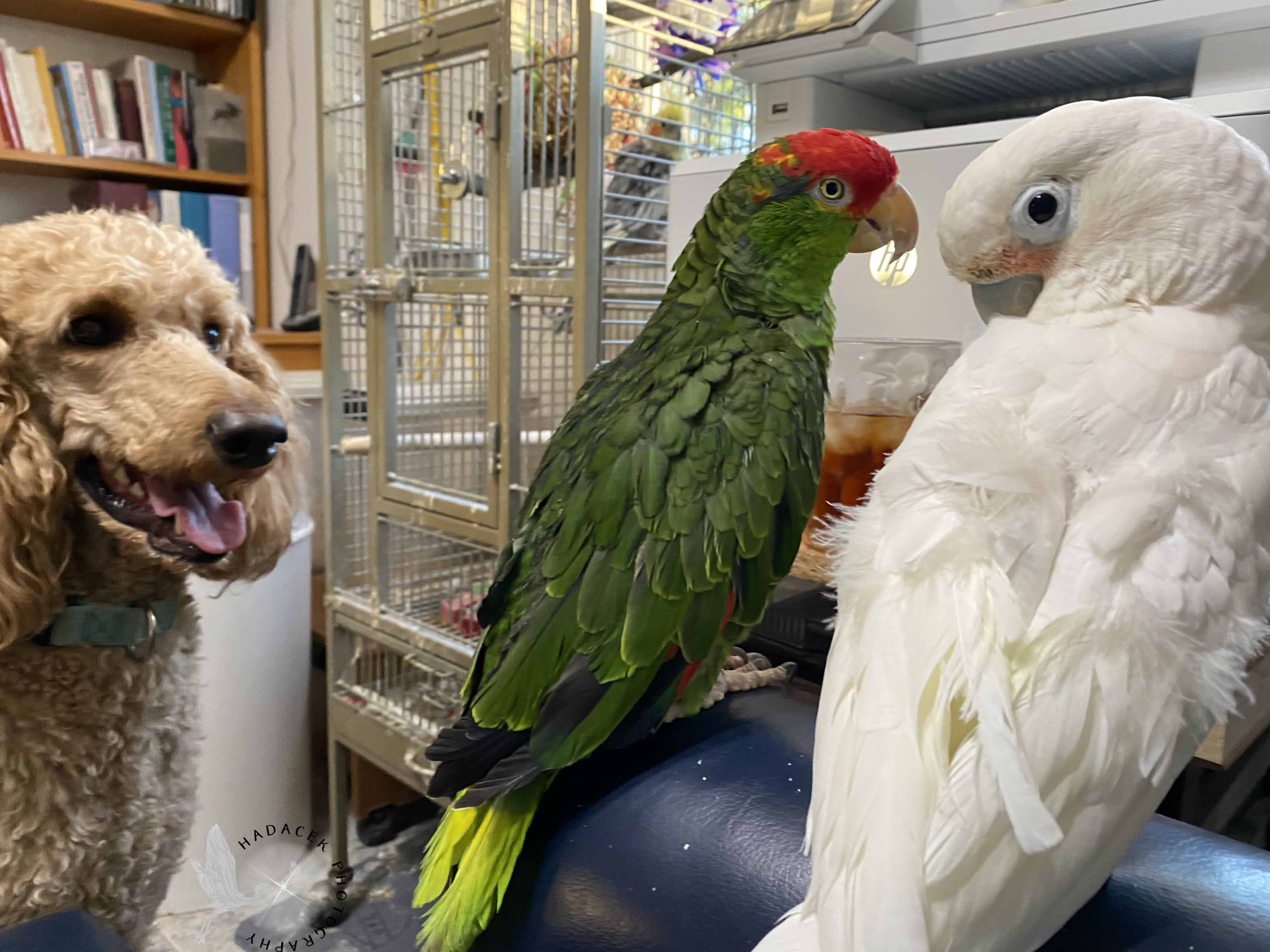 parrots and dog